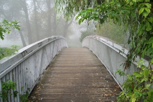 1356646_romantic_bridge_in_the_fog.jpg