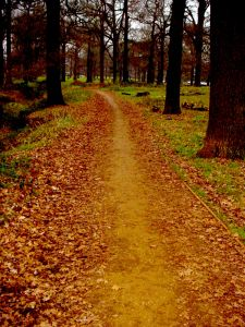 440683_wandering_the_path.jpg