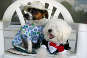974025_dressed_dogs.jpg