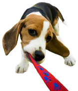 beagle%20crop.jpg